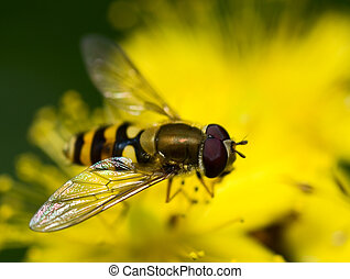 yellow fly sitting on a flower
