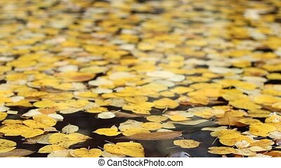 Yellow Foliage on Water
