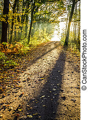 Yellow footpath in the autumn forest