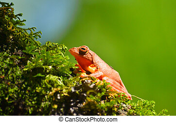 yellow frog on moss