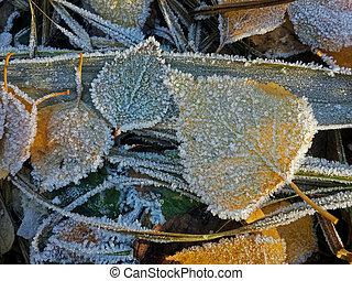yellow frozen leaf