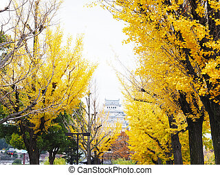 Yellow ginkgo tree on street to Himeji Castle in autumn season, Japan.