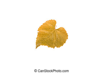 yellow grape leaf isolated on white background