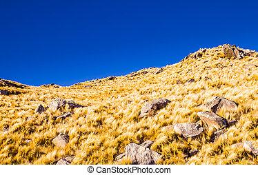 Yellow grass hills
