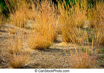Yellow grass in the sand