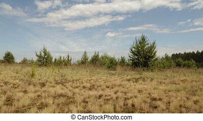 Yellow grass on a field under a hot sun