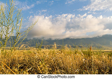 yellow grass on the field in front of mountains