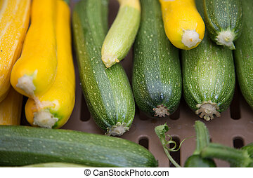 Yellow grean zucchini courgettes closeup