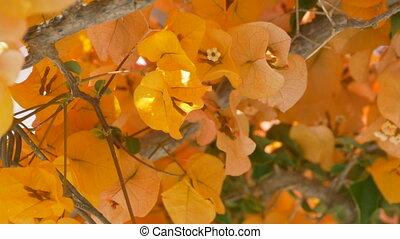 Yellow Greek Flowers - Yellow mediteranean flowers in Greece...