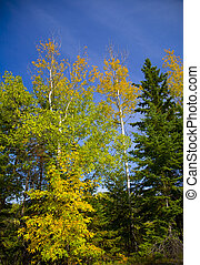 Yellow, Green, and Blue Sky