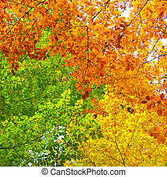 Yellow, green and orange leaves, autumn background