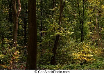 yellow green forest