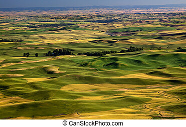 Yellow Green Wheat Fields Roads and Farms from Steptoe Butte...
