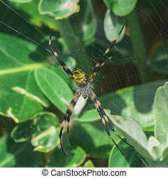Macro of a yellow Hawaiian garden spider in its web.