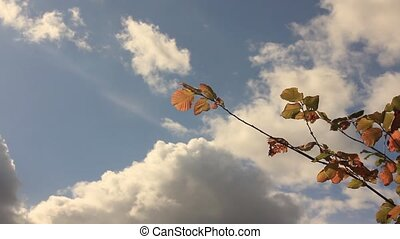 yellow hazel leaves against and the sky with cumulus clouds