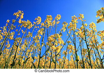 yellow herb under blue sky