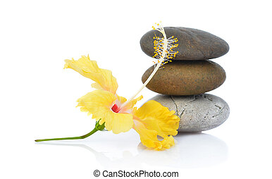Yellow hibiscus flower with stones isolated on white background