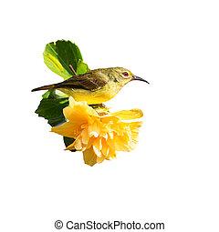 Yellow hibiscus flowers and birds