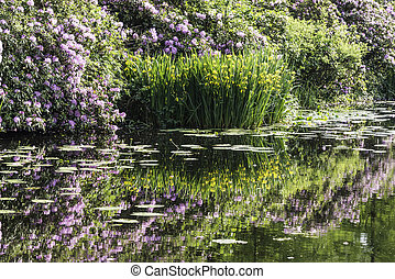 yellow iris and purple rhododendron reflect in water