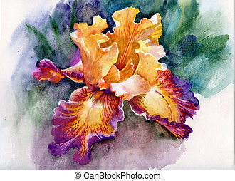 beautiful yellow iris painted in watercolor