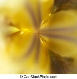 Yellow Iris Macro