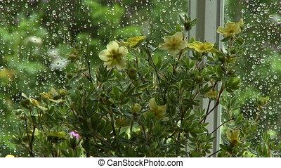 Yellow Jasminum Flowers