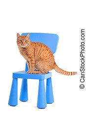Yellow Kitten on a Blue Chair