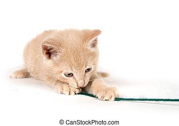 Yellow kitten playing with yarn on white