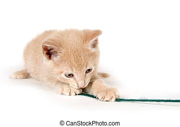 Yellow kitten with green yarn