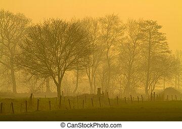 Yellow landscape during misty morning sunrise
