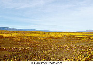 Yellow Landscape Plateau Tankwa Karoo - Yellow Fields and...