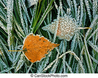 Yellow leaf and frozen