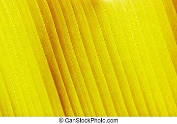 yellow leaf close-up