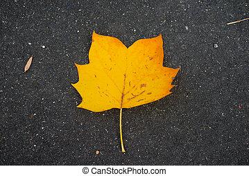 Yellow leaf in autumn season