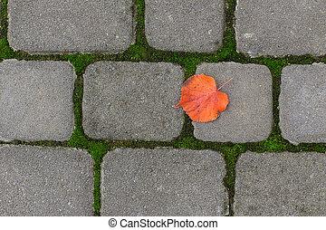 yellow leaf on paving stone