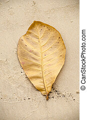 yellow leaf on sand