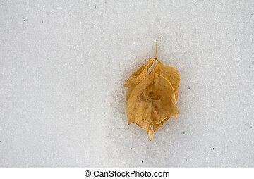 yellow leaf on snow