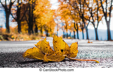 Yellow leaf on the road