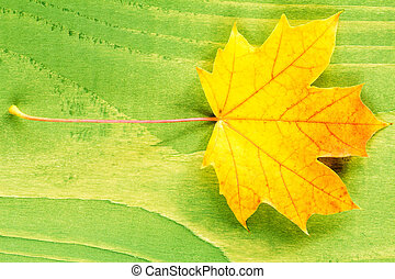 Yellow leaf over green background