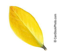 Yellow leaf vein isolated on white background