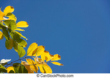 yellow leaf with blue sky