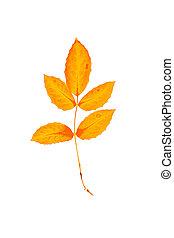Yellow, leaf