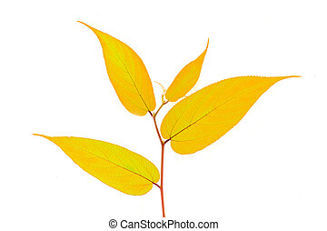Yellow leave on white