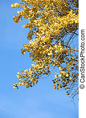 yellow leaves against the blue sky