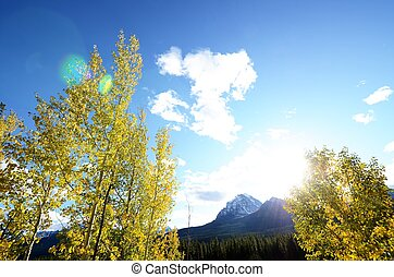 Yellow leaves and Mount Temple,Canadian Rockies,Canada