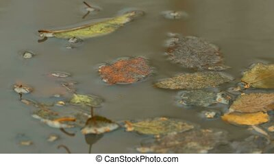 yellow leaves autumn floating in pool puddle