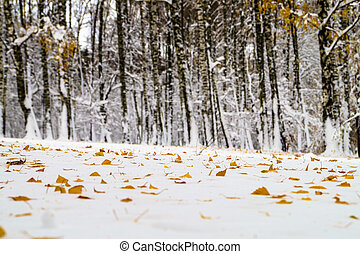 yellow leaves birch tree lies in the snow at winter