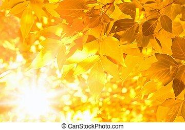 Yellow leaves, bright sunshine, season fall