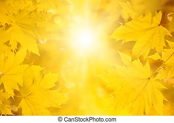 Fall background - bright sun, yellow maple leaves