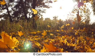 Yellow leaves falling in autumn park and sun shining through...